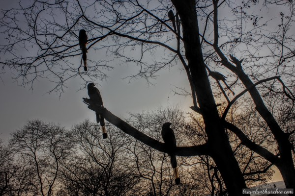 An evening with the birds of Ranthambore