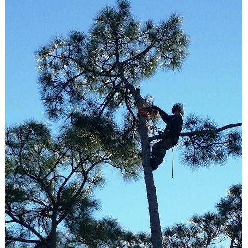 Medium Crop Of Out On A Limb Tree Service