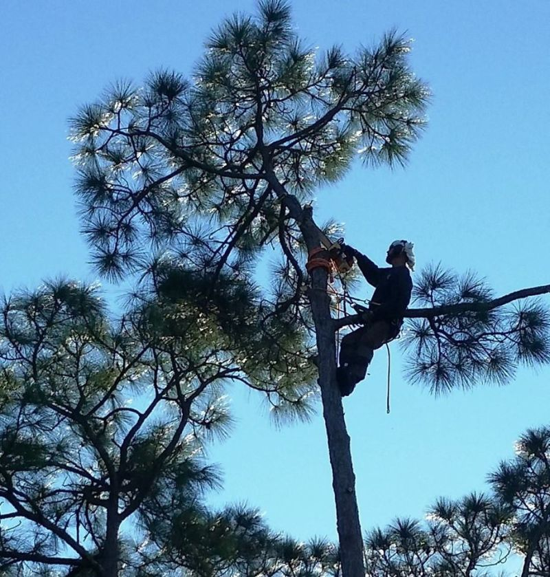 Large Of Out On A Limb Tree Service