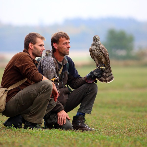 Falconry_Czech_Men_05