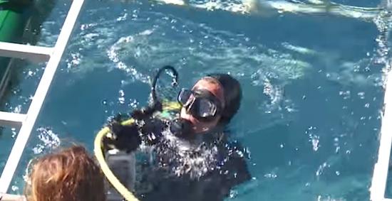 Shark attacks man in cage
