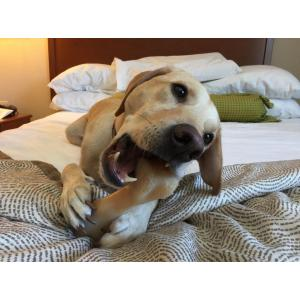 Robust Asheville Nc Pet Friendly Extended Stay Hotels Pet Friendly Extended Stay Hotels Hotels That Allow Dogs St Louis Hotels That Allow Dogs