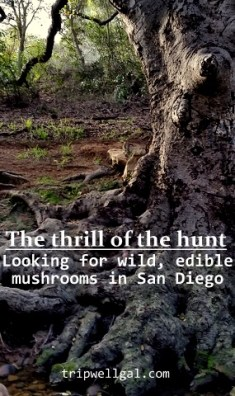 wild edible mushroom pin 1