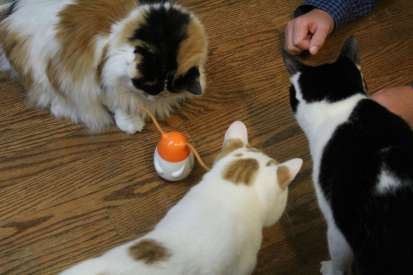 My cats just loved the Friskies Pull N Play cat treats.