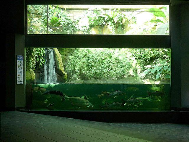 Time To Setup Your Aquarium Equipment