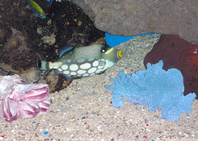 Aquarium Maintenance in Phoenix AZ | Aquarium Installation and Setup