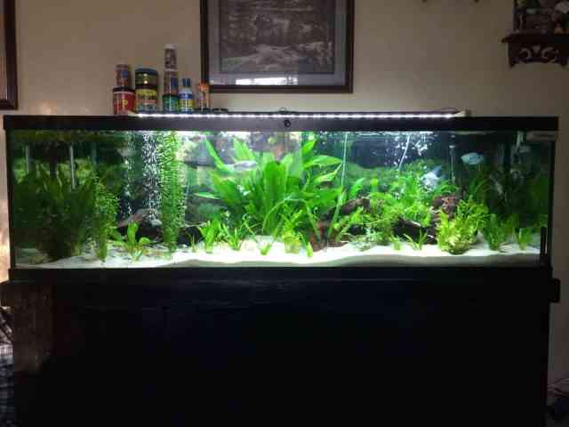 125 Gallon Freshwater Planted Aquarium | Tropical Fish Site