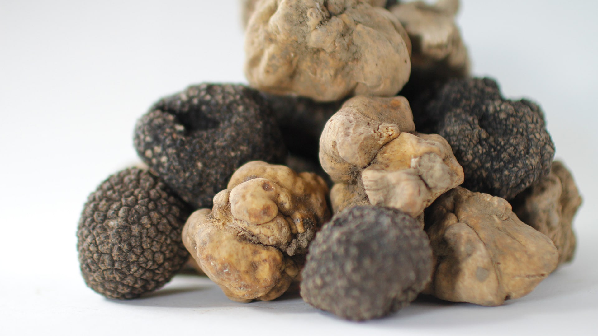 Spieces of Truffle