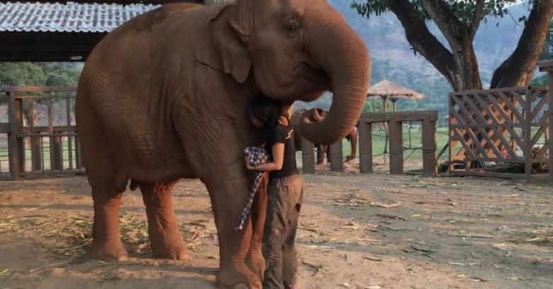 elephant-lullaby
