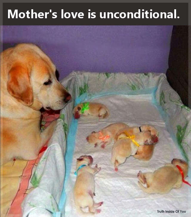 Mother's love is unconditional