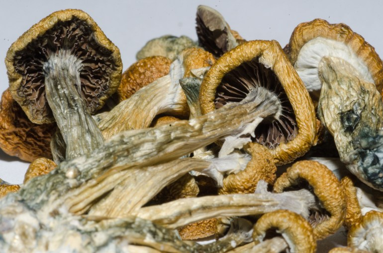 Legal Psychedelics Could End The Antidepressant Industry.