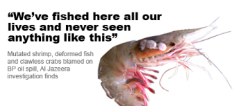 Fishermen have reported mutated and diseased sea life caught in the Gulf of Mexico as a result of the Deepwater Horizon oil spill and the subsequent dispersal of BP Corporation's highly toxic Corexit dispersant.