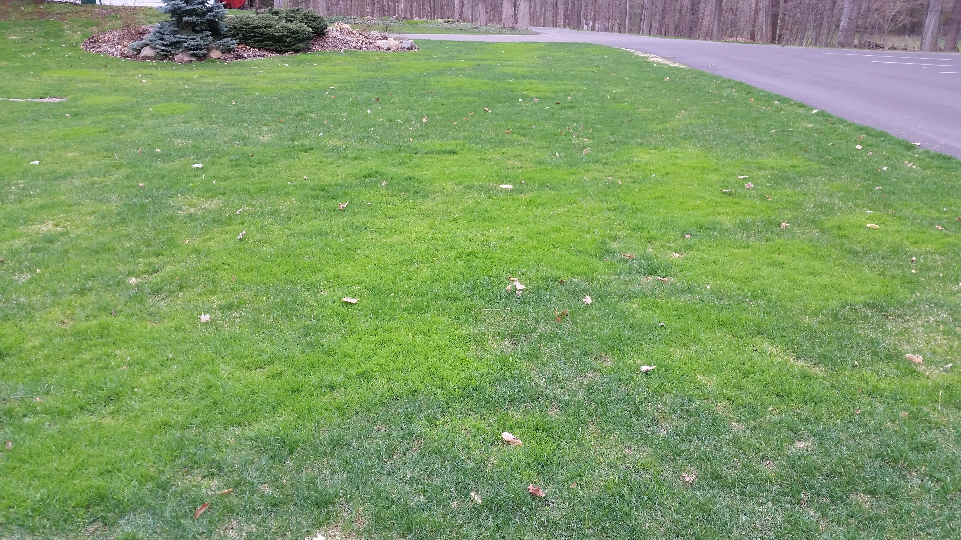 Catchy Lawns Home Depot Lawns Lowes Gypsum Spotty Lawn Patchy Lawns Tuff Turf Molebusters Gypsum houzz-02 Gypsum For Lawns