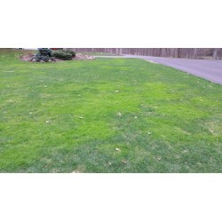 Catchy Lawns Home Depot Lawns Lowes Gypsum Spotty Lawn Patchy Lawns Tuff Turf Molebusters Gypsum