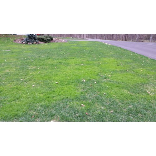 Medium Crop Of Gypsum For Lawns