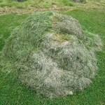 Bezoekers vraag: Afgemaaid gras… wat ermee te doen?