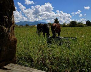 truchas-horses