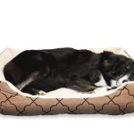 Guide To Buying A Dog Bed