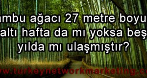 network marketing bambu agaci