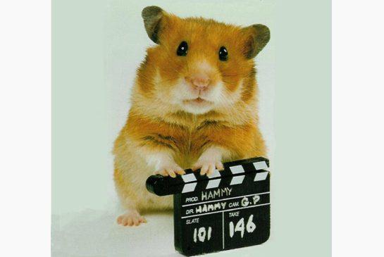 Hammy_Hamster