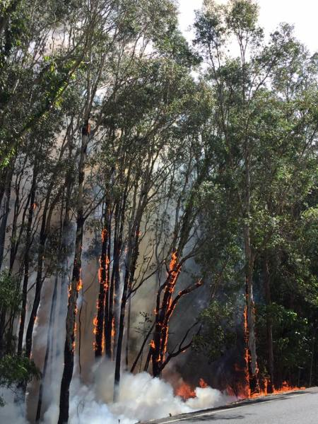 Early photo of the bushfire. Photo credit Duncan Marchant
