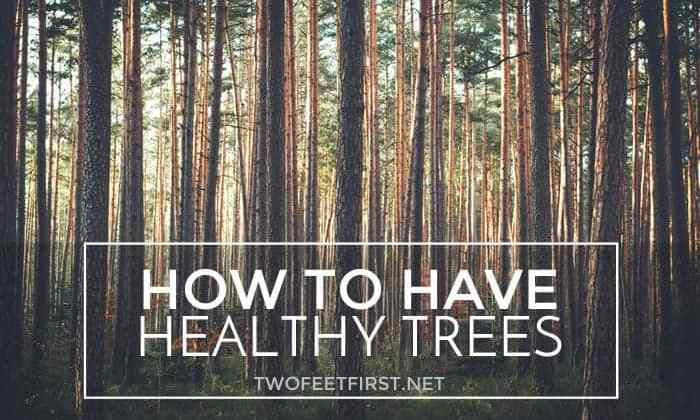 Help your Trees!!!