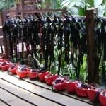 A Canopy Zip-line Tour in Costa Rica