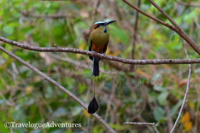 Diria National Park Birds