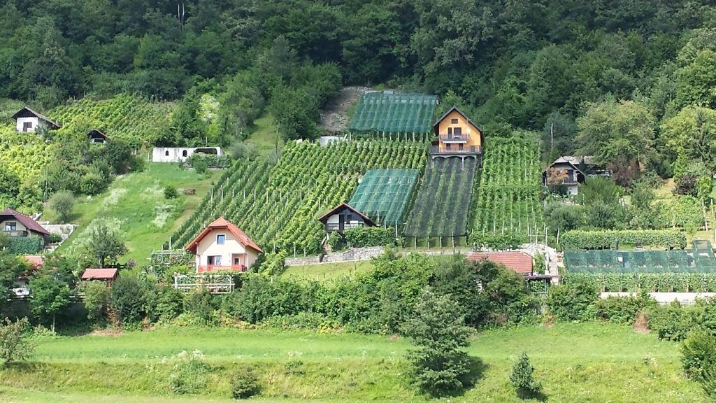 Your own vineyard as a back garden