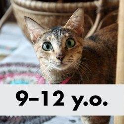 villa-kitty