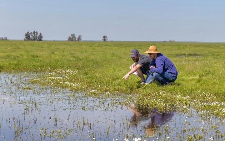 Merced Vernal Pools and Grassland Reserve