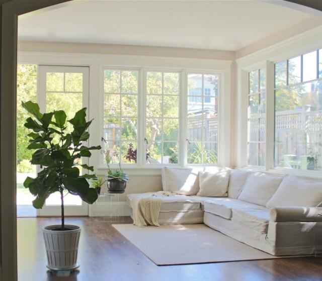 fiddle leaf fig family room