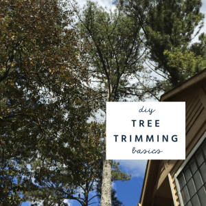 diy tree trimming pruning basics