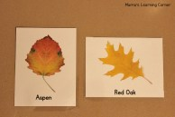 leaf-identification-cards