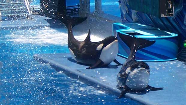 SeaWorld Orca, 'Blackfish'