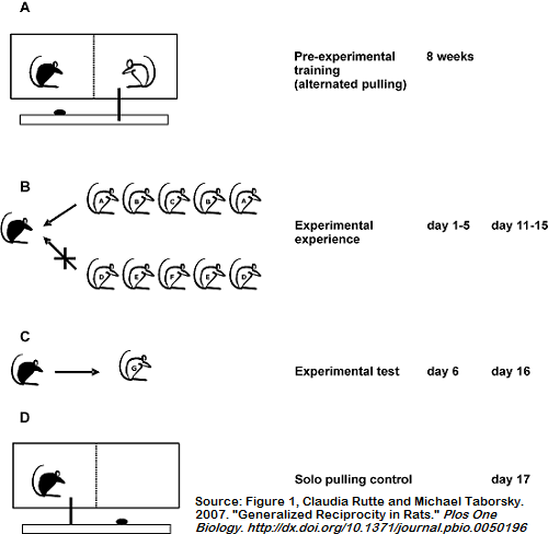 Rutte and Taborsky 2007: Generalized Reciprocity in Rats