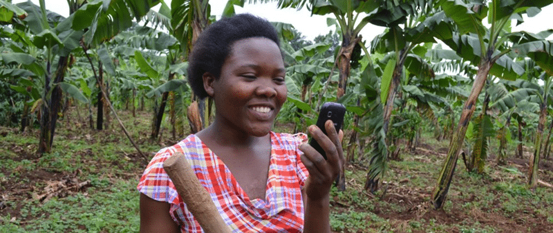 The Enabling Farmers to Adapt to Climate Change project uses a set of ICT tools to collect, analyze and send out agricultural advisories, crop and livestock market information and weather data to Ugandan farmers, who are among the most affected by the impacts of climate change.