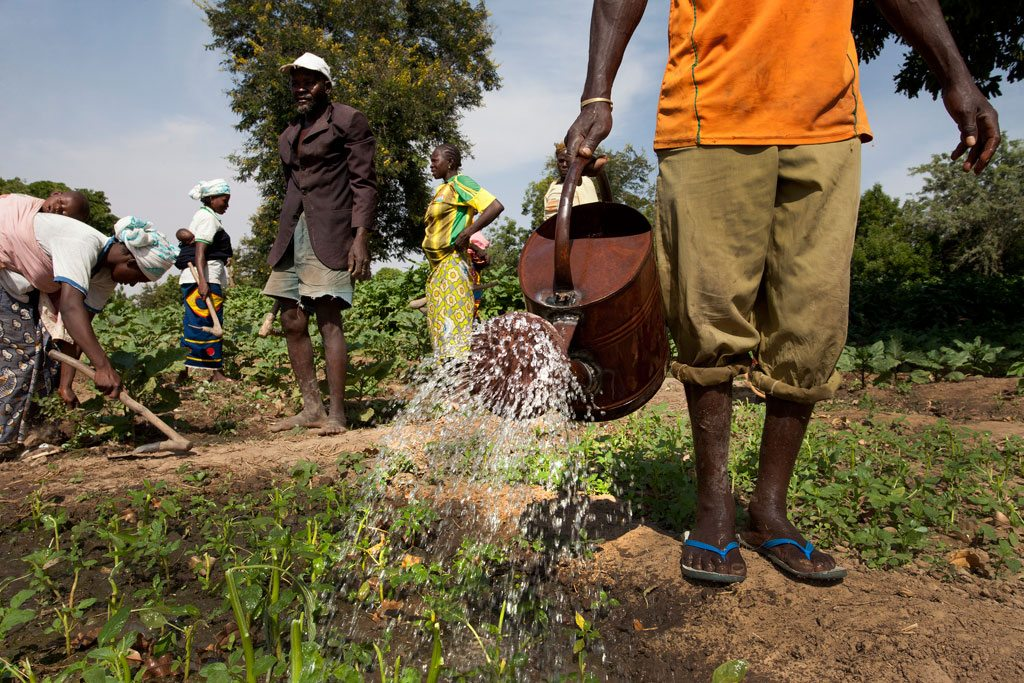 Photo: Members of the Cooperative Agriculture Maraicher for Boulbi, water and hoe their vegetable fields in Kieryaghin village, Burkina Faso. Photo: Dominic Chavez/World Bank