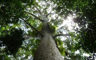 Photo: Forests play a critical role for many countries in their ability to mitigate climate change.