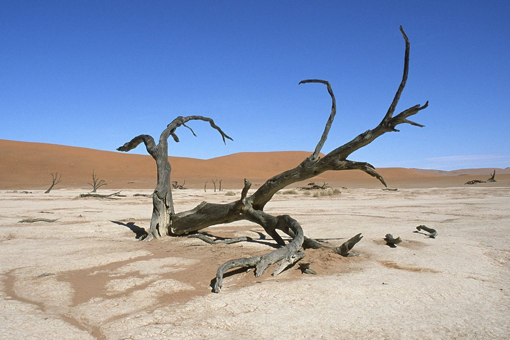 Photo: A fallen tree in Namibia's Namib desert.