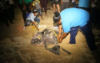 Ms. Lakhan Baptiste (right), with the organization Nature Seekers, gets help measuring a leatherback turtle that has just given birth on Matura Beach. The group has become a model for conservation efforts in the Caribbean region. Photo: UN News/ Lulu Gao