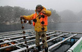 Shigeatsu Hatakeyama picks up oysters on a farm raft. Photo/Mori wa Umi no Koibit
