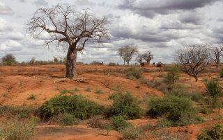 Baobab tree in a degraded, arid landscape in Kenya's Eastern province. Photo: World Bank/Flore de Preneuf