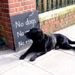 Está prohibida la entrada a los perros.
