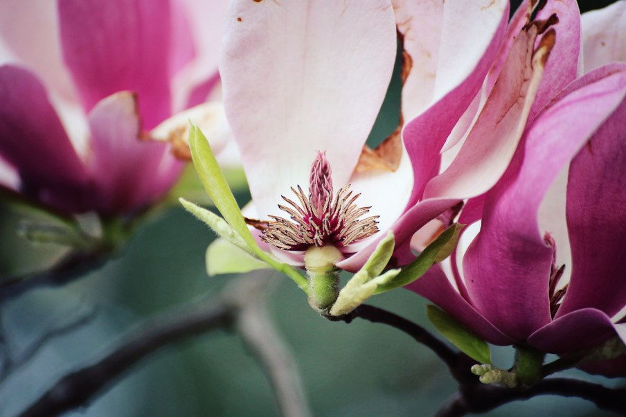 The inside of a tulip tree's flowers.