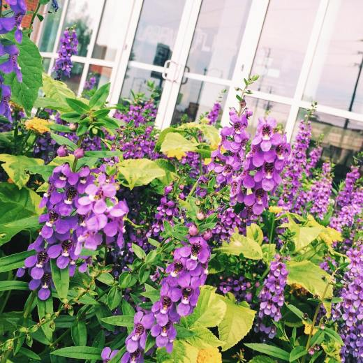 Pretty flowers around Lindbergh  VSCOcam