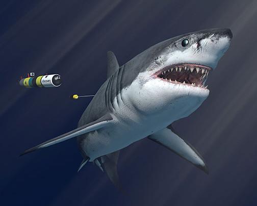 Inside SharkCam