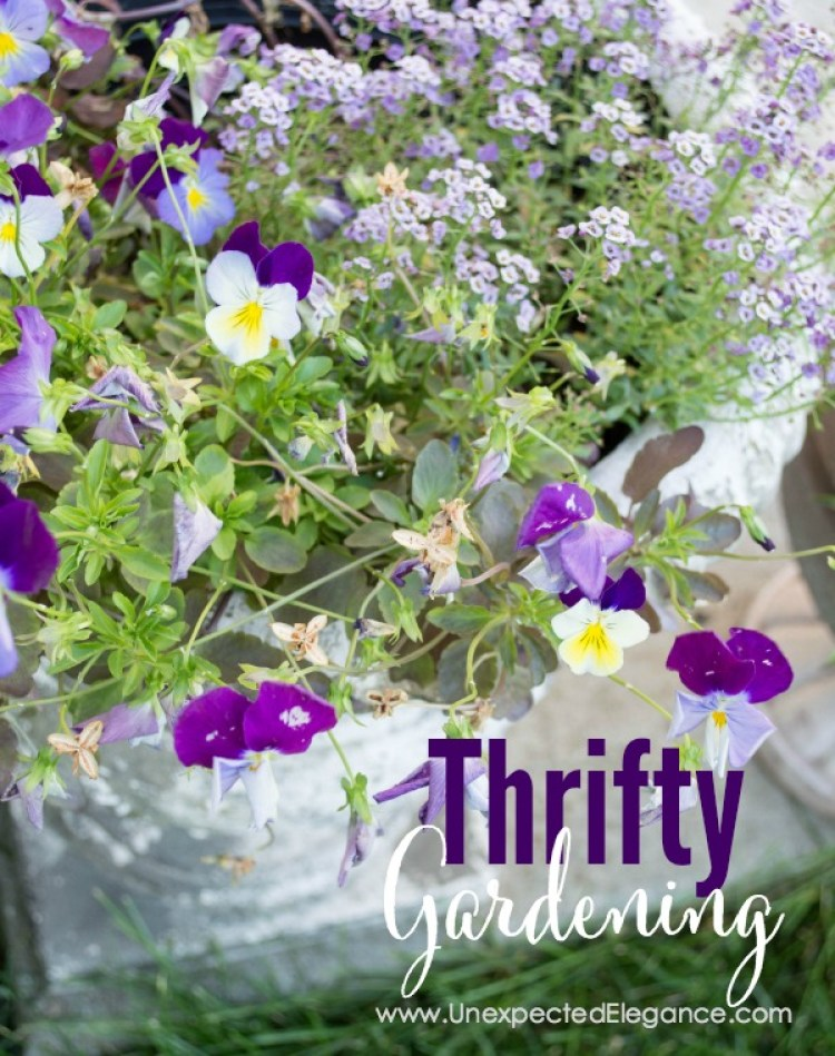 Do you struggle with gardening? Plants can be expensive, too! Check out these 3 tips for THRIFTY GARDENING...they will help you save money and your sanity.