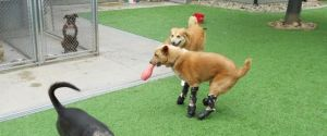 Naki'o, The World's First Mechanically Augmented Dog
