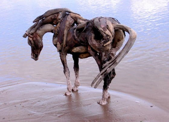 horse standing on sand